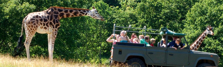Safari i Ree Park . . .